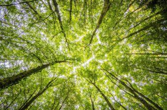 Visuel Ambiance Forêt